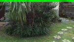 1532135142783_thumb.jpg